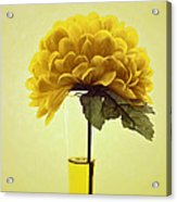 Estillo - S03-01q2 Acrylic Print by Variance Collections