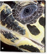 Extreme Close-up Of The Head Acrylic Print by Beverly Factor