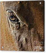 Eye Of The Horse Acrylic Print by Susan Candelario