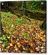 Fall Along Middle Fork Acrylic Print by Thomas R Fletcher