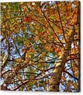 Fall Canopy Acrylic Print by Barry Jones