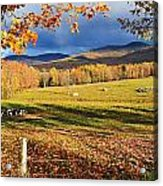 Fall Colours, Cows In Field And Mont Acrylic Print by Yves Marcoux