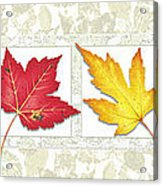 Fall Leaf Panel Acrylic Print by JQ Licensing