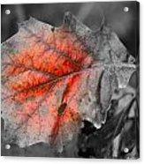 Fall Leaf Acrylic Print by Rick Rauzi
