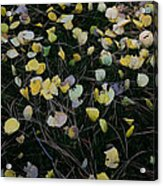 Fall Leaves Acrylic Print by John Wong