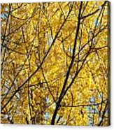 Fall Trees Art Prints Yellow Autumn Leaves Acrylic Print by Baslee Troutman