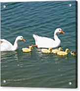 Family Outing On The Lake Acrylic Print by Ed Churchill