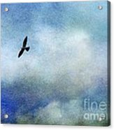 Far Above Acrylic Print by Judi Bagwell