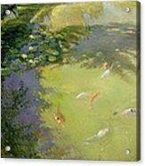 Featherplay Acrylic Print by Timothy Easton