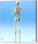 Female Skeleton, Artwork Acrylic Print by Roger Harris
