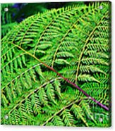 Fern Frond Acrylic Print by Kaye Menner