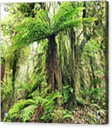 Fern Tree Acrylic Print by MotHaiBaPhoto Prints