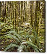 Ferns Sit On The Forest Floor Acrylic Print by Taylor S. Kennedy