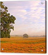 Field Of Gold Acrylic Print by Paul Riemer
