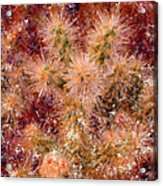 Fireworks Explosion Acrylic Print by Marilyn Sholin