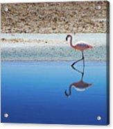 Flamingo Acrylic Print by MaCnuel