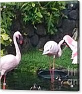 Flamingo Party Acrylic Print by Silvie Kendall