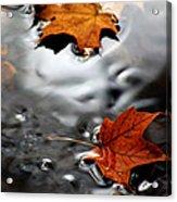 Floating Maple Leaves Acrylic Print by LeeAnn McLaneGoetz McLaneGoetzStudioLLCcom