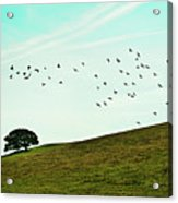 Flock Of Birds Acrylic Print by Where Photography meets Graphic Design.