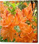 Floral Art Prints Orange Rhodies Flowers Acrylic Print by Baslee Troutman