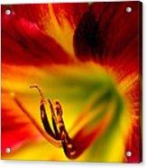 Floral Macro Of A Blossom Acrylic Print by Floyd Menezes