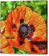 Flower - Poppy - Orange Poppies  Acrylic Print by Mike Savad