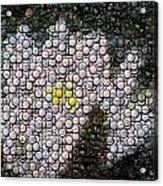 Flower Bottle Cap Mosaic Acrylic Print by Paul Van Scott