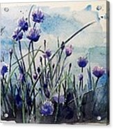 Flowering Chives Acrylic Print by Stephanie Aarons