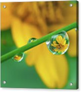 Flowers In Water Droplets Acrylic Print by Thank you.