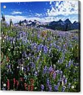 Flowers With Tattosh Mountains, Mt Acrylic Print by Natural Selection Craig Tuttle