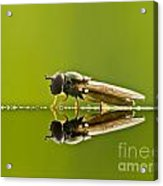 Fly Reflection Acrylic Print by Odon Czintos