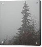Foggy Sentinel Acrylic Print by Skip Willits