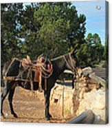 For The Ride Down Acrylic Print by Heidi Smith