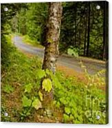 Forest Escape Acrylic Print by Idaho Scenic Images Linda Lantzy