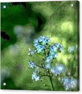 Forget-me-not Grunge Acrylic Print by Darren Fisher