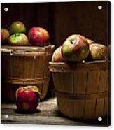 Fresh From The Orchard IIi Acrylic Print by Tom Mc Nemar
