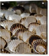 Fresh From The Sea Acrylic Print by Heather Applegate