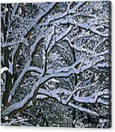 Fresh Snowfall Blankets Tree Branches Acrylic Print by Tim Laman