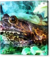 Frog Ready To Be Kissed Acrylic Print by Susan Savad