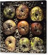 Frozen Apples Acrylic Print by Bernard Jaubert