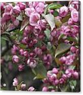 Full Blossom Acrylic Print by Erika Betts