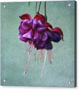 Fuschia Flower Acrylic Print by Kim Hojnacki