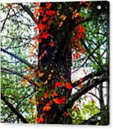 Garland Of Autumn Acrylic Print by Karen Wiles