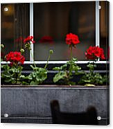 Geranium Flower Box Acrylic Print by Doug Sturgess