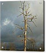 Ghost Tree Acrylic Print by Douglas Barnett