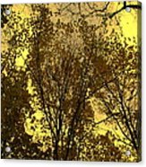 Glisten Acrylic Print by Ed Smith