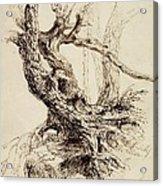 Gnarled Tree Trunk Acrylic Print by Thomas Cole