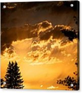Golden Sky Acrylic Print by Kevin Bone