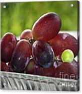 Grapes Acrylic Print by Gwyn Newcombe