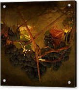 Grapes Acrylic Print by Peter Labrosse